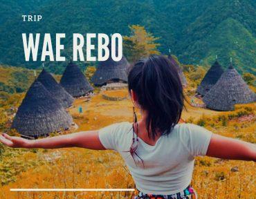 trip wae rebo